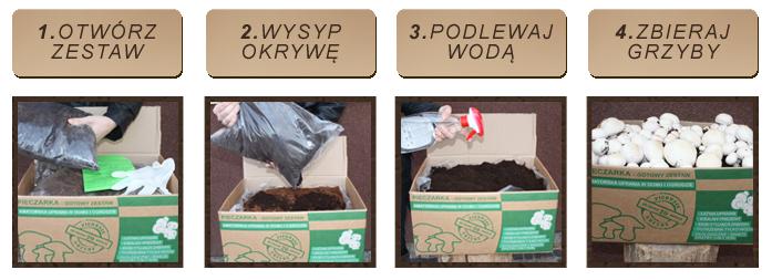 instrukcja uprawy pieczarki